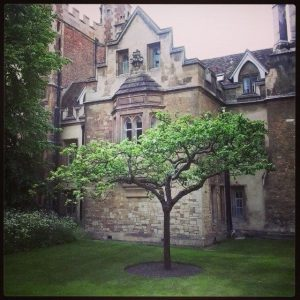 The famous Apple tree under which Newton discovered gravity taken by @Richardstandrews