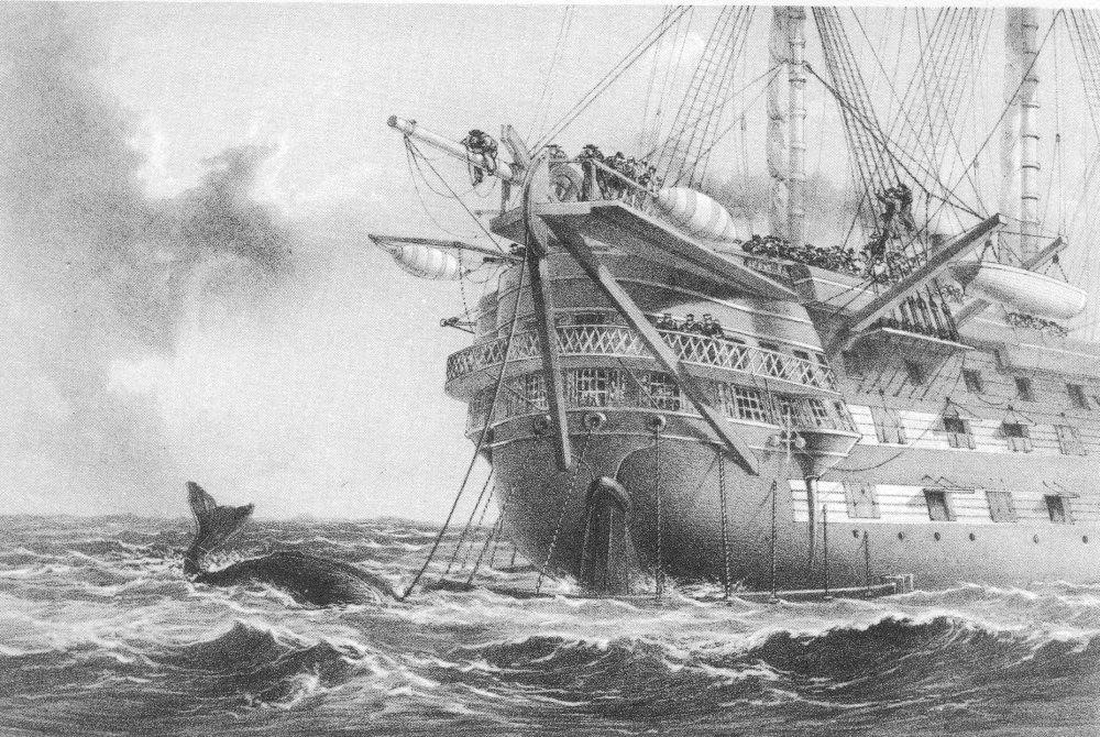 ballena-agamemnon-barco