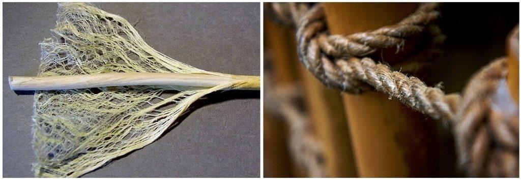 Stem of hemp  lesser elements of construction