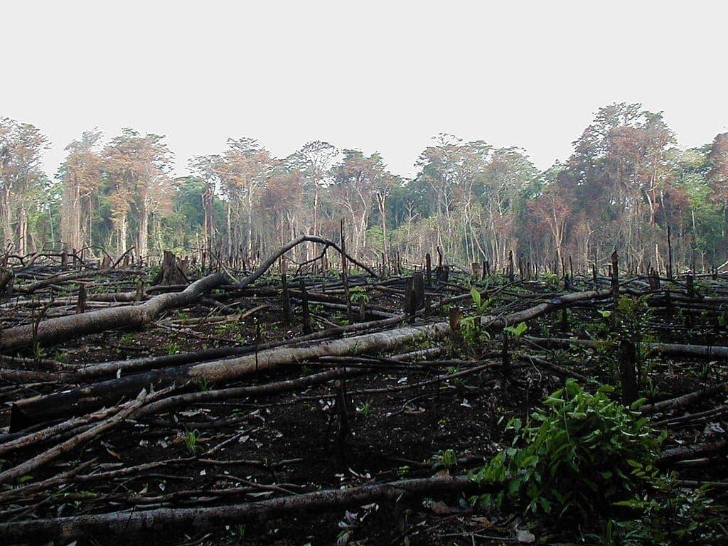 Cultivo vertical selva en mexico