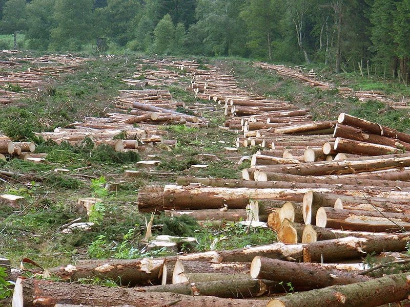 drones y el medio ambiente desforestación