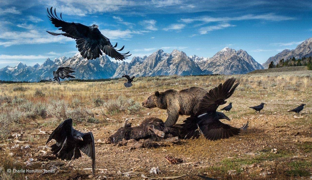 summer exhibitions wildlife photography