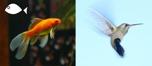 Biomimetic design fish bird