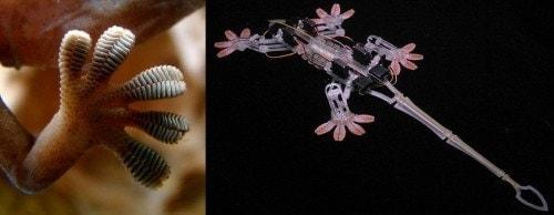 arquitectura biomimetica gecko