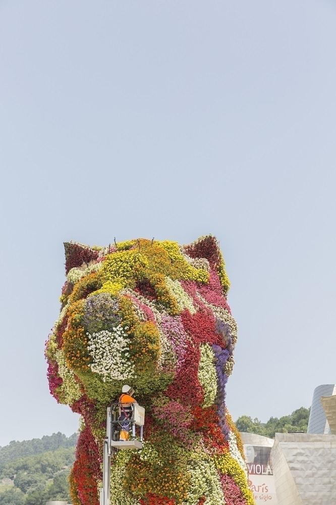 gardener working on flower puppy in guggenheim museum