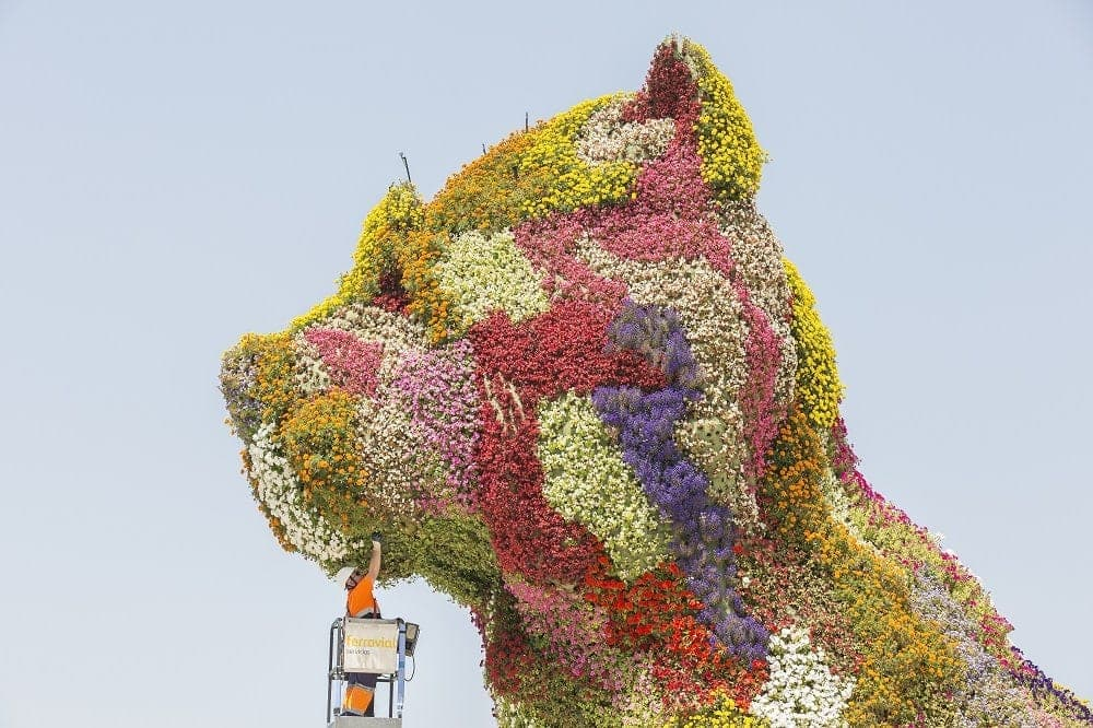 gardener flower puppy in guggenheim museum