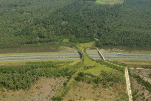 pasos naturales de fauna por autopistas