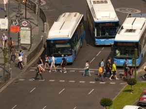 buses waiting at a red light for pedestrians to pass