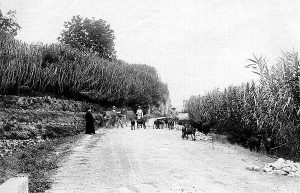 The road through Las Angosturas, in Priego de Córdoba, in the early 20th century. Rural road were animals an people walk through.