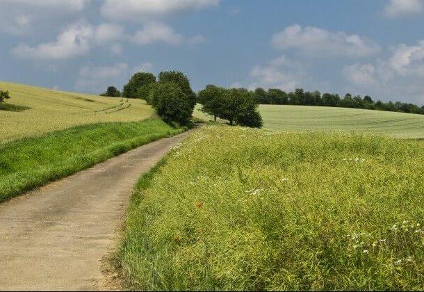 Paisaje con hierba, árboles y un camino