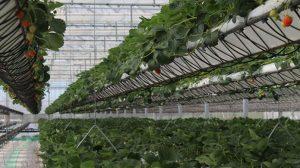 Espejos solares y tecnología hidropónica para cultivos en invernadero