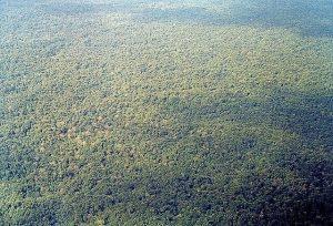 Vista aérea del tapón del Darién en el departamento de Chocó, Colombia