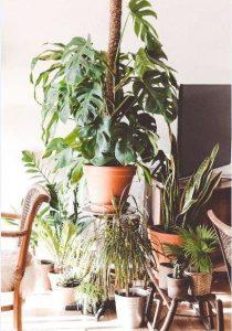 gift christmas house plant
